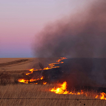Bush Fire & Drought Relief