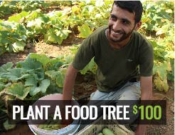 RMN - Plant a Food Tree $100